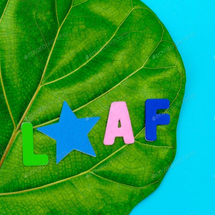 Leaf. Green. Flat lay minimal