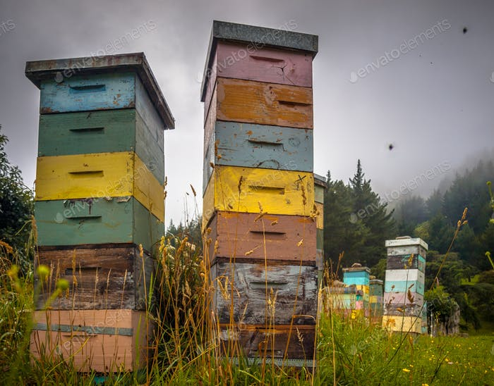 Colorful vintage wooden Bee Hives