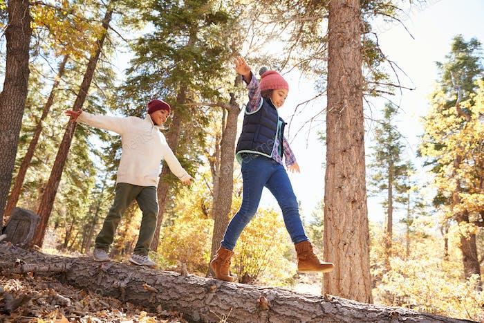 Kinder mit Spaß und Balancing auf Baum im Herbst Wald