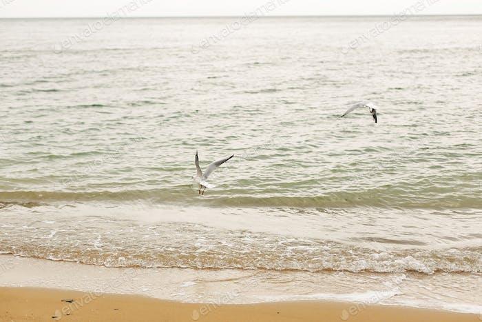 Seagulls walking on sandy beach near sea waves