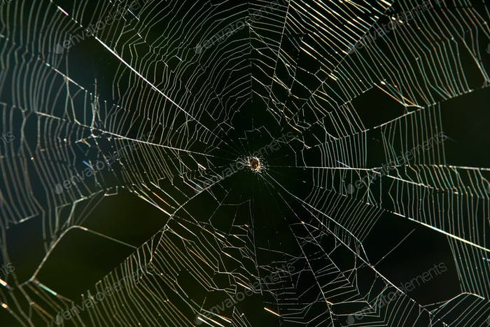 Close up view the spider web