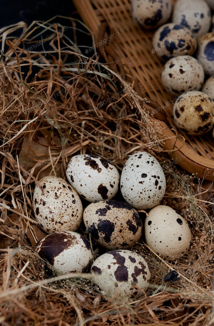 Quail eggs in hay nest