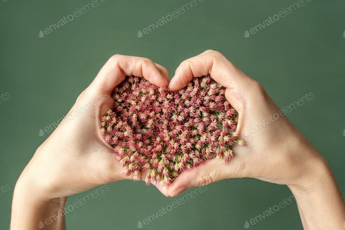 Pink flower heart on the hand.