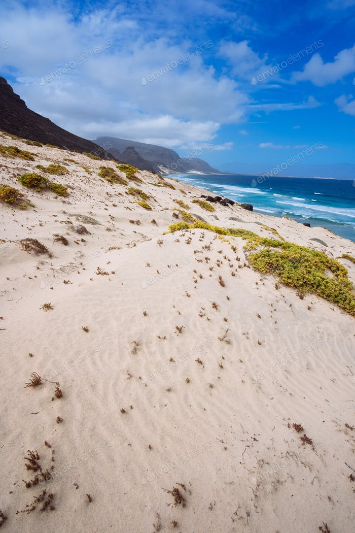 Sandy dunes with some desert plants in stunning desolate landscape of atlantic coastline. Baia Das