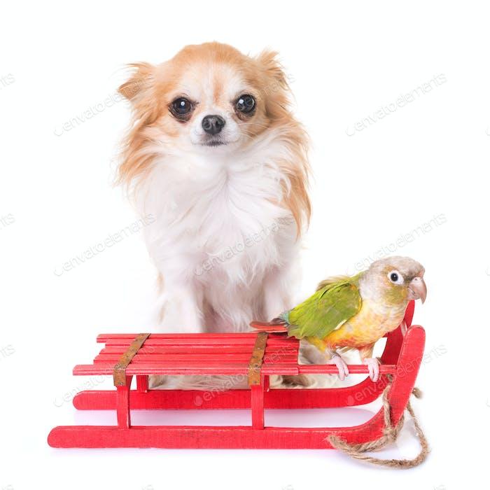 dog, bird and christmas