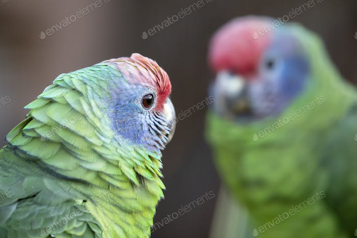 Wild colourful parrots sitting on branch