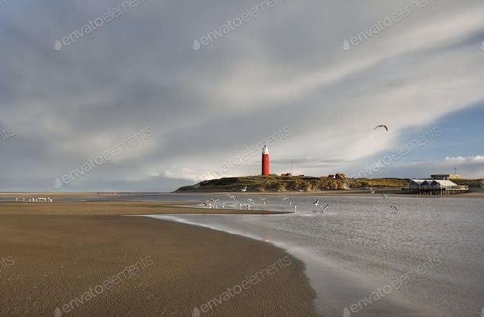 seagulls over lighthouse on sea coast