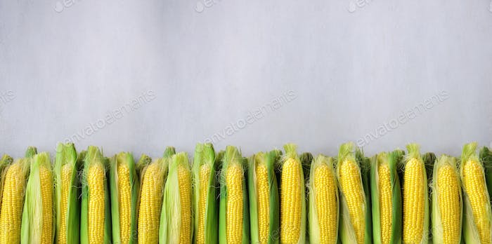 Fresh corn on cobs on light grey concrete background, closeup, top view, copy space. Banner
