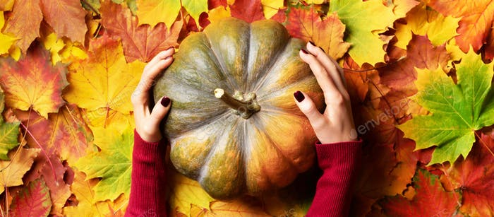Thanksgiving day concept. Female hands holding pumpkin on colorful fallen leaves background. Top