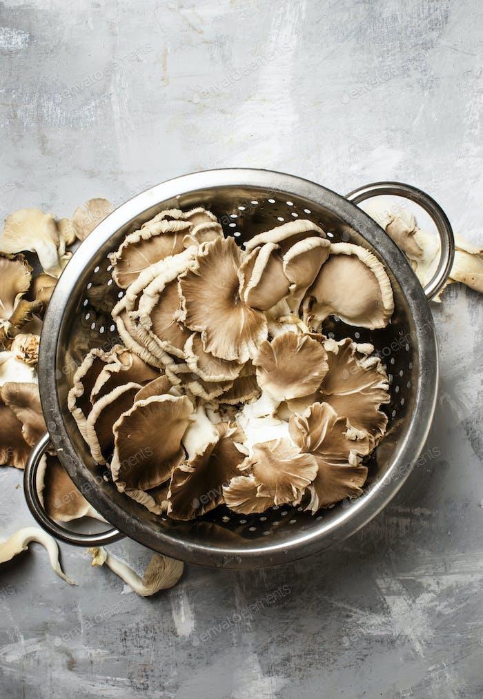 Fresh raw oyster mushrooms