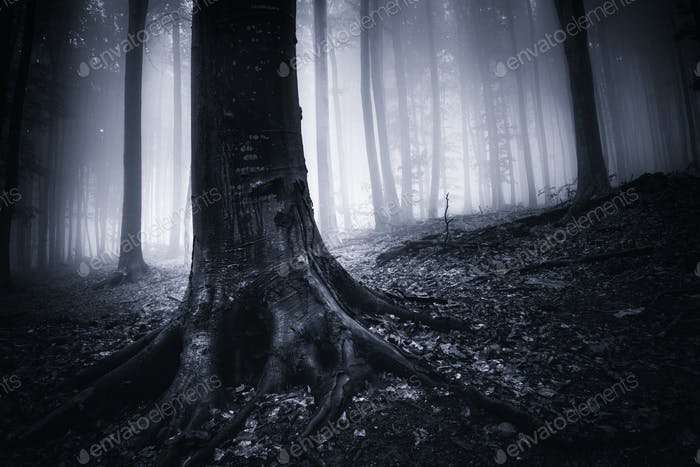 Old tree with giant roots in dark forest with fog