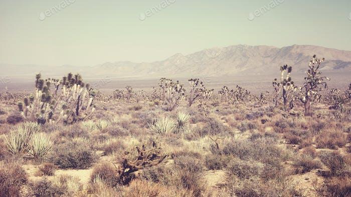 Joshua Tree National Park landscape, California, USA.