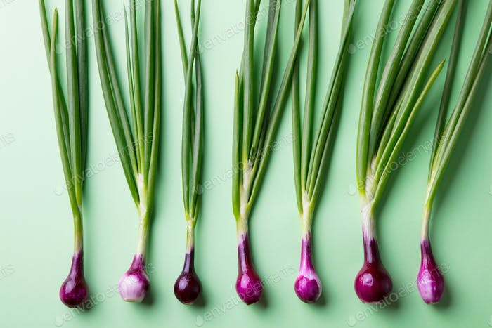 Green Onions on Green Pastel Background. Flat Lay Composition. Top view.