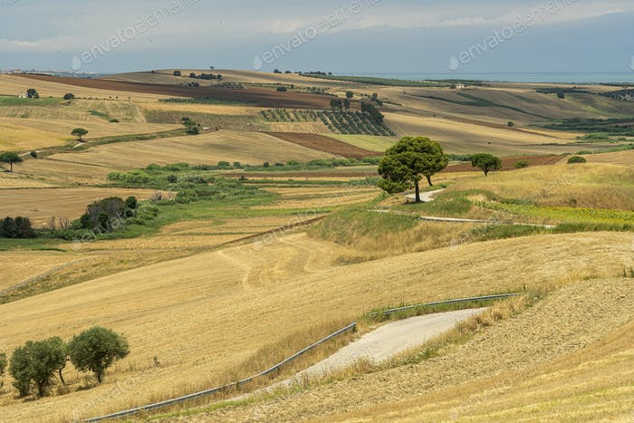 Summer landscape in Apulia near Serracapriola