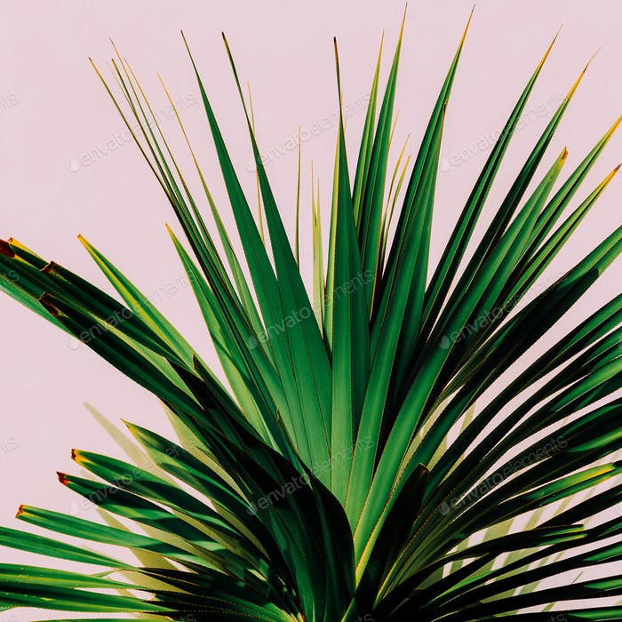 Cactus on the pink. Minimal art. Tropical fashion photo print