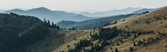 panoramic shot of golden lawn with pines near mountains