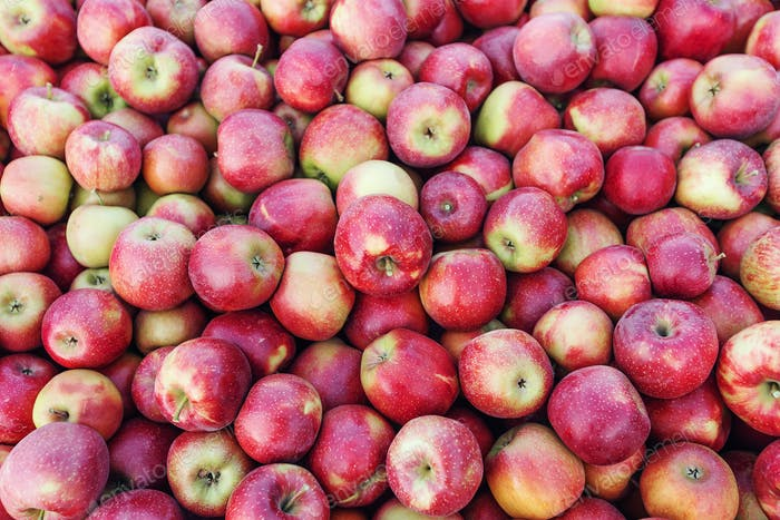 Eco agriculture, business. Industry, farm business and excellent organic fruit harvest