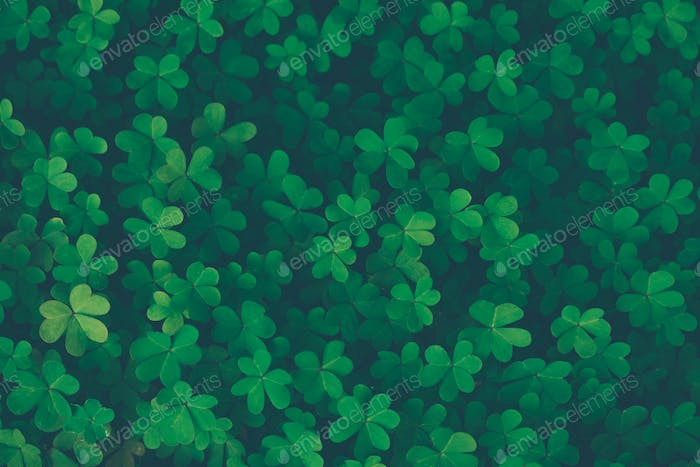 Lucky clover vintage background