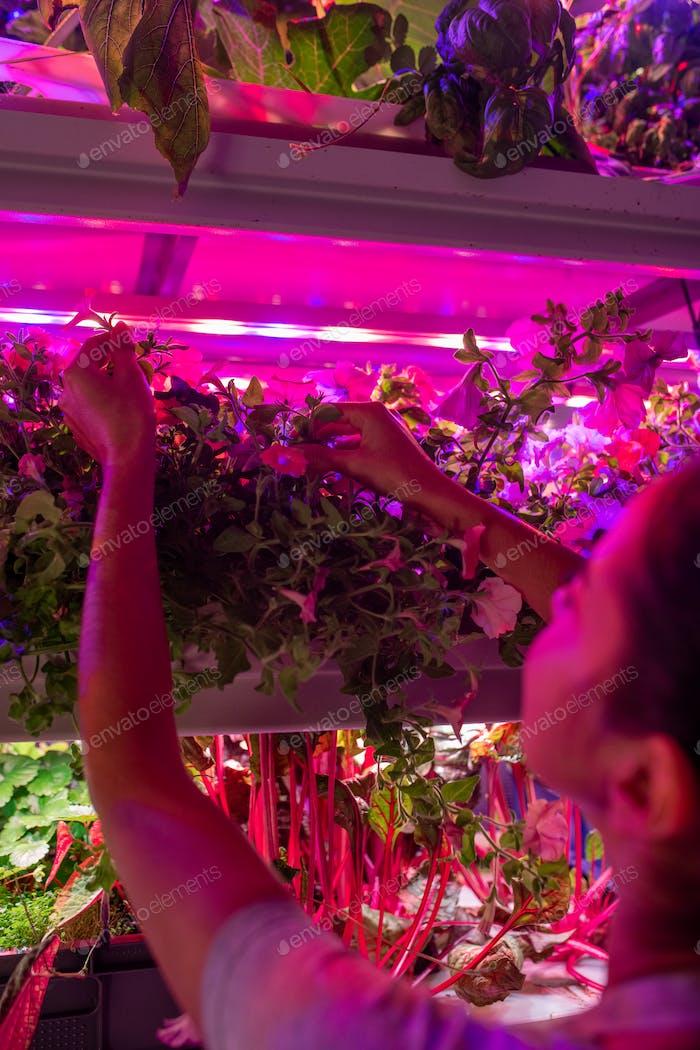 Anheben von Anlagen unter LED-Lampen