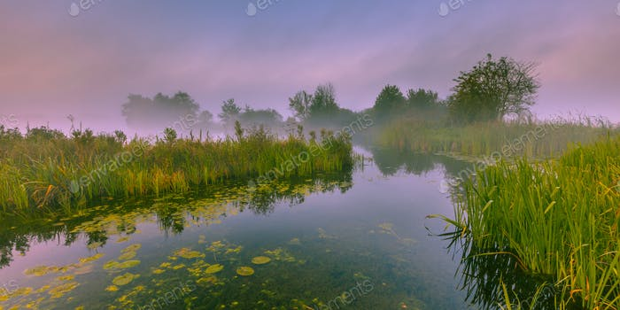 Foggy Marshland river