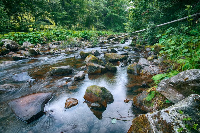 River in the forest. Beautiful natural landscape in the summer t