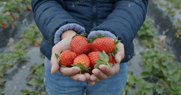 Woman hold strawberry in the farm