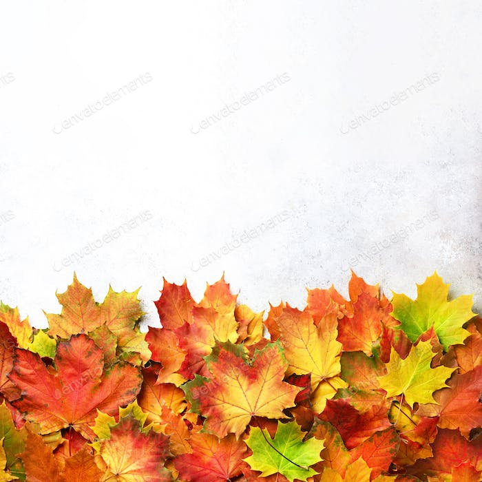 Autumn background. Season and weather concept. Colorful autumn leaves on gray concrete texture with