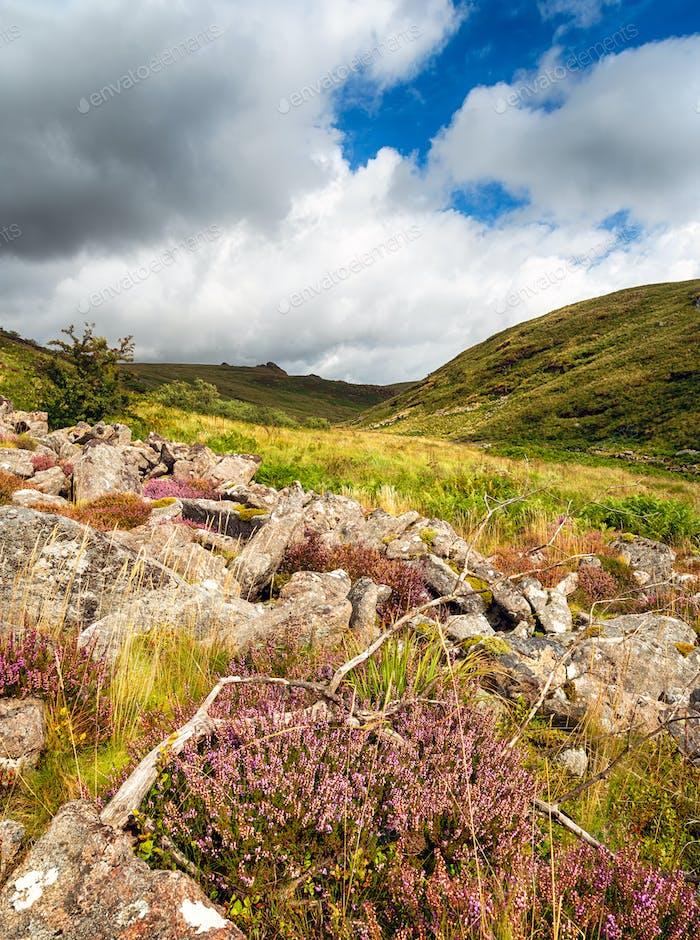 Summer on Dartmoor