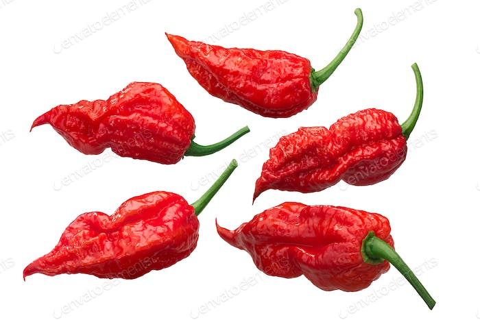 Bhut Jolokia ghost peppers c. chinense, paths