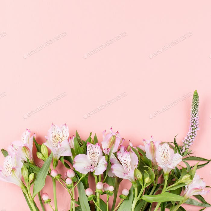 Card with pink Alstroemeria flowers on pastel pink