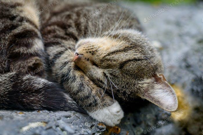 Close up of cat sleeping