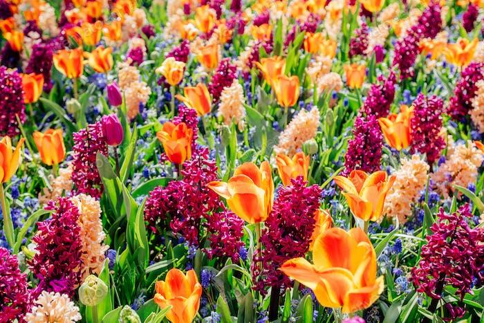 Feld der wilden Blumen.