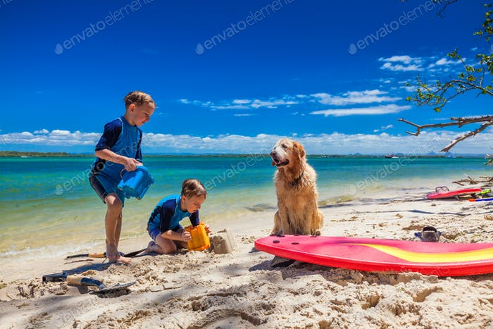 Two brother playing on the beach with bucket and golden retrieve