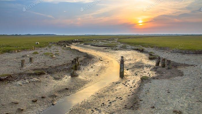 Tidal channel marshland Ameland