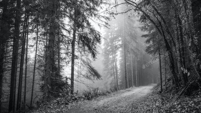 Misty forest bw