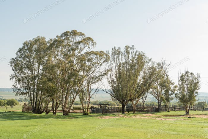 Early morning farm scene at the Koranna Mountain near Excelsior