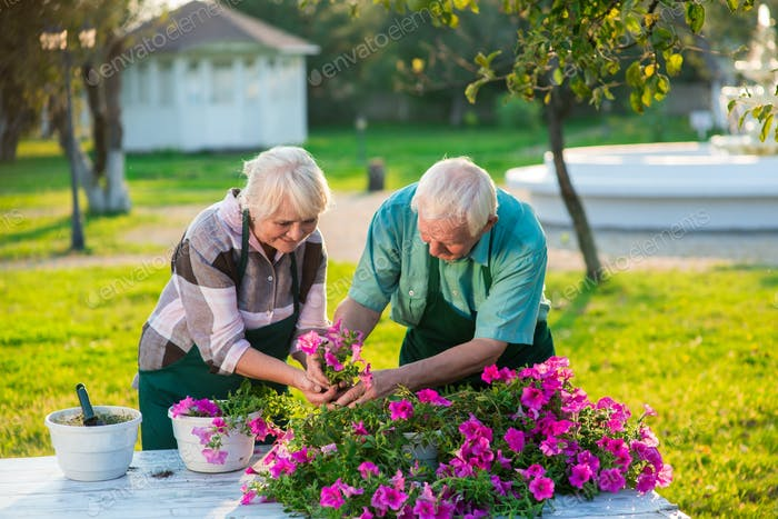 Senior people transplanting flowers