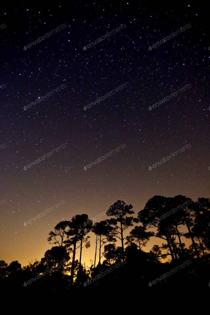 stars over forest