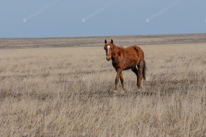 Foal in prairie