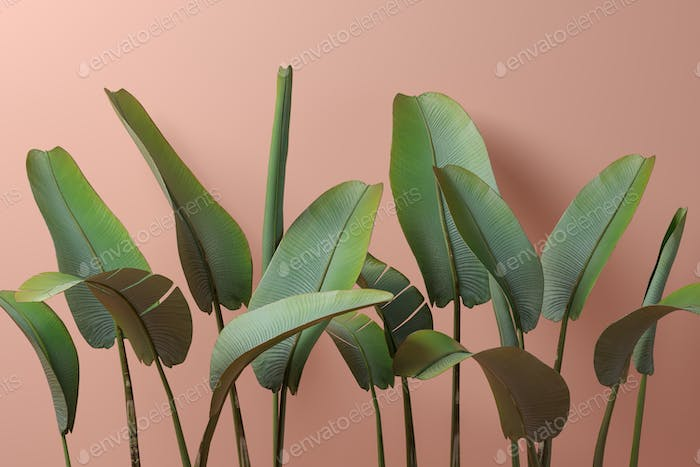 Banana leafs on pink background 3D illustration