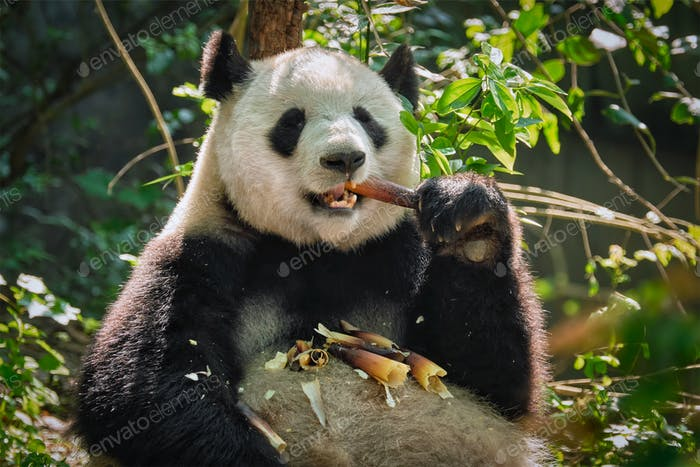 Riesiger Pandabär in China