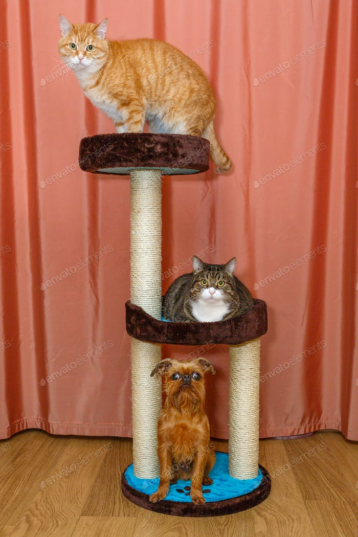 Two  cats and  dog sitting on a scratching post