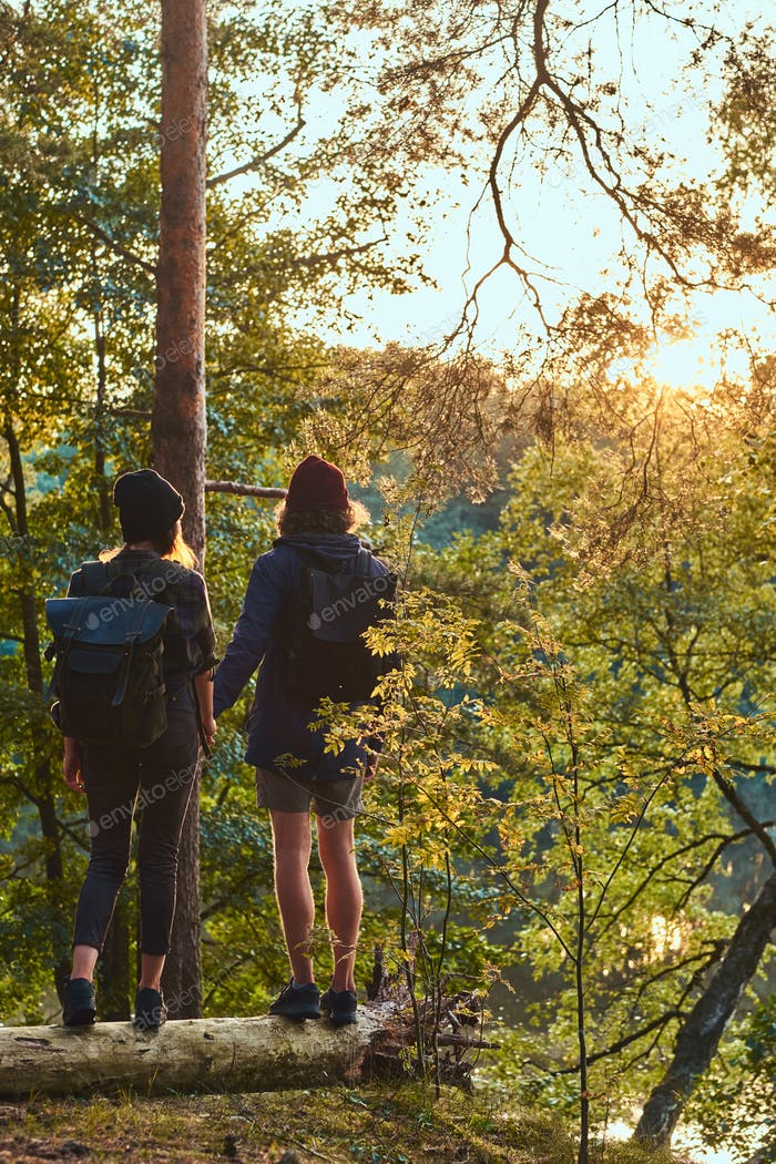 Young hipster couple holding hands standing on a trunk in a beautiful forest at sunset