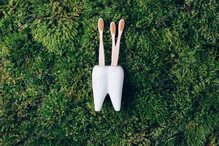 Toothbrush stand shaped like primary molar tooth with toothbrushes on green moss background. Top