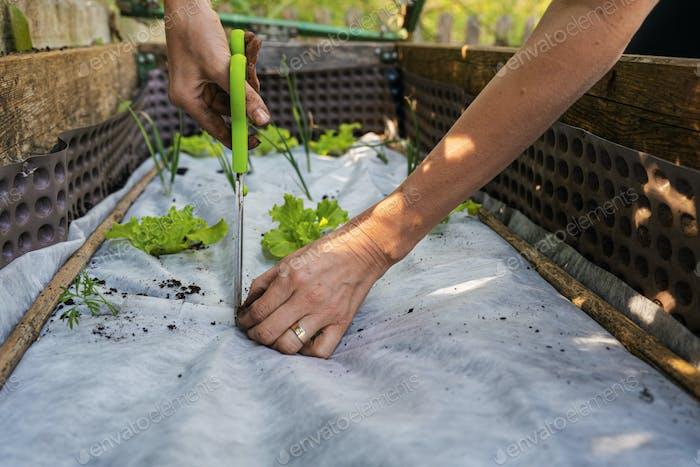 Woman getting her vegetable garden ready for seedlings
