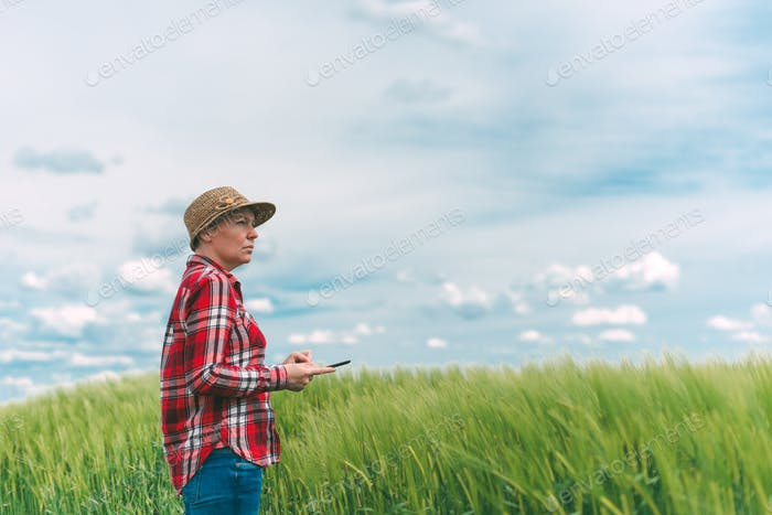 Farmer using digital tablet in wheat crop field