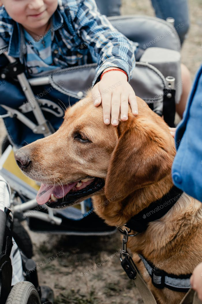 Canis Hunde-Therapie. Labrador Hund und behinderte Kinder auf grünem Gras. Hund-assistierte Therapien und