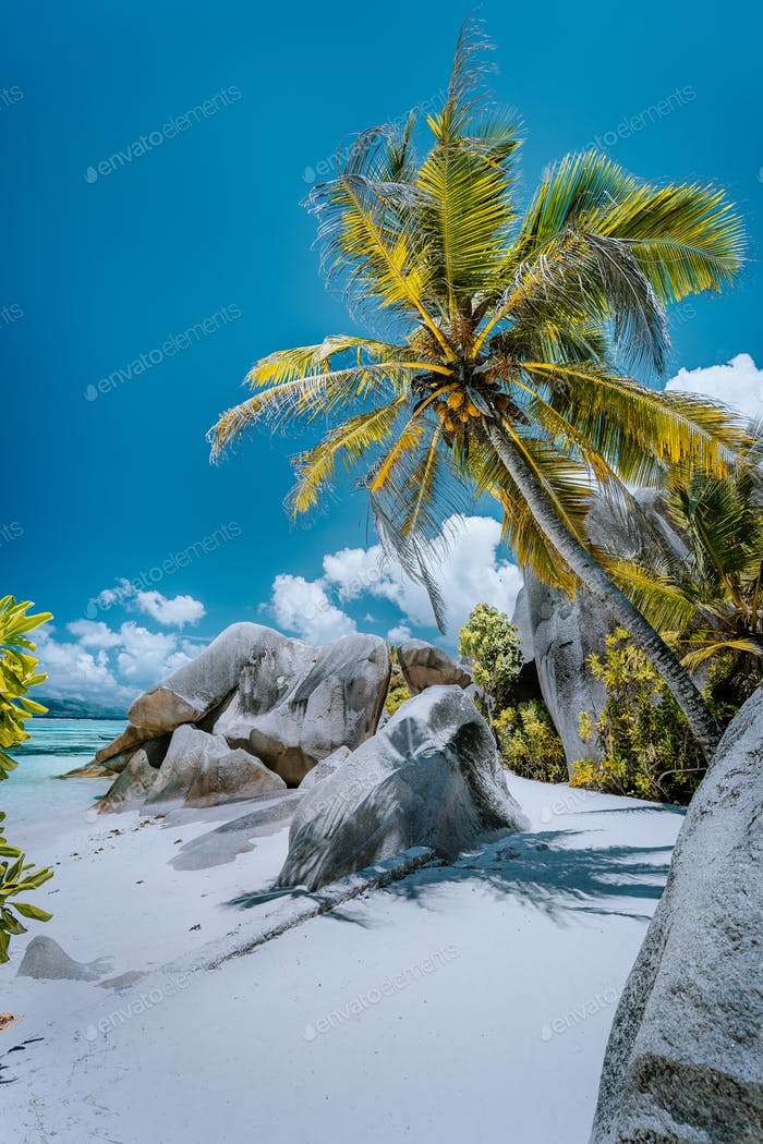 Coconut palm tree on way to source d'Argent beach, La Digue, Seychelles