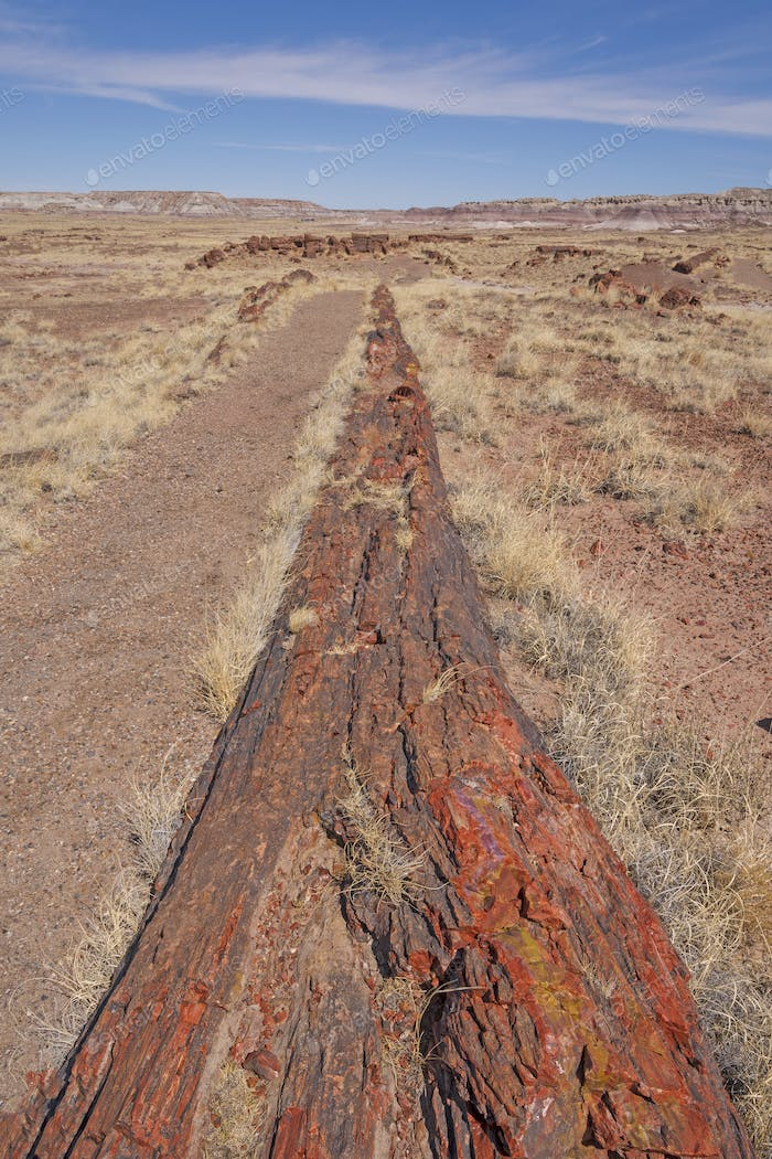 Very Long Petrified Log in the Desert
