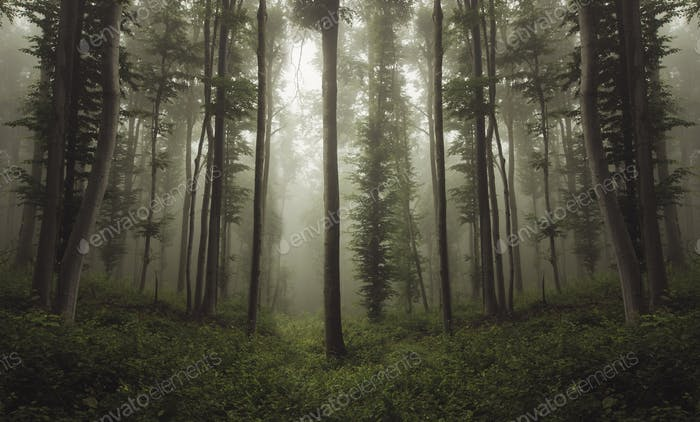 natural misty forest landscape background